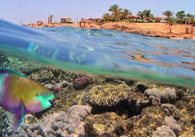 Пляжный отдых в Египте
